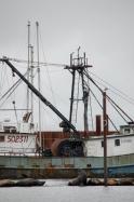 Sea Lions in Astoria, OR