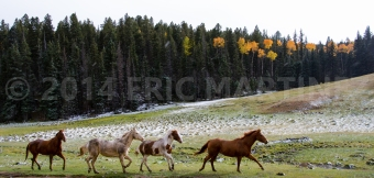 Philmont Scout Ranch, NM