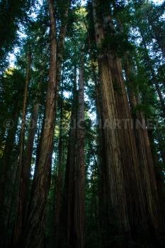 Redwood NP, CA