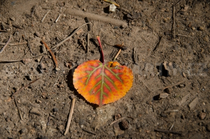 Aspen Leaf, Philmont Scout Ranch, NM