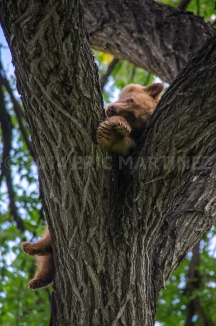 Black Bear Cub, Philmont Scout Ranch