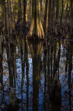 Congaree National Park, SC