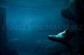 Sea Lion in Alaska