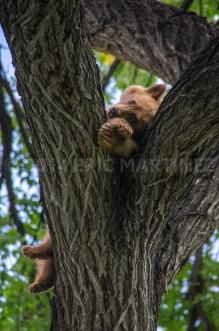 Black Bear Cub, Philmont Scout Ranch, NM