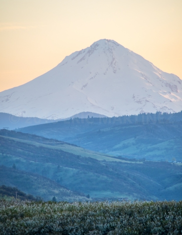 Mt. Hood from The Dalles, OR