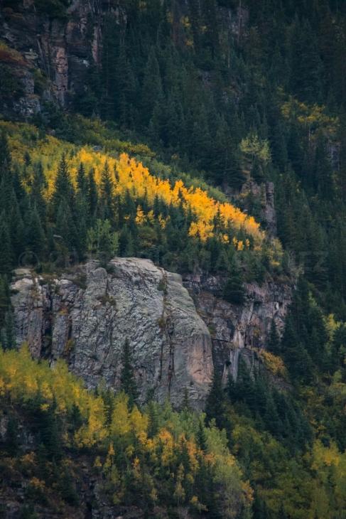 Aspen trees near the Maroon Bells, CO