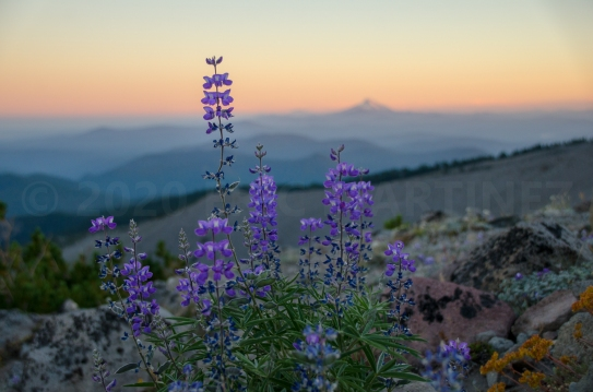 Mt. Hood National Forest, OR