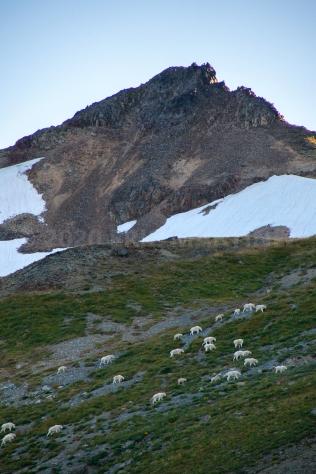 Mountain Goats, WA